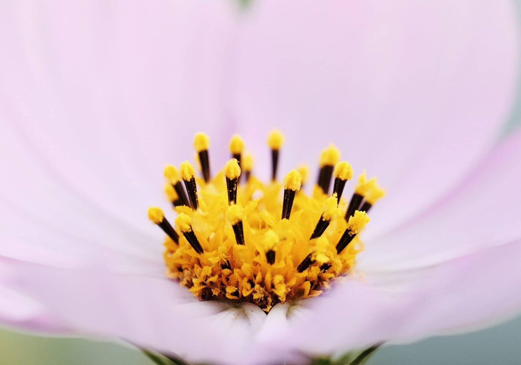 pink flower unsplash-2
